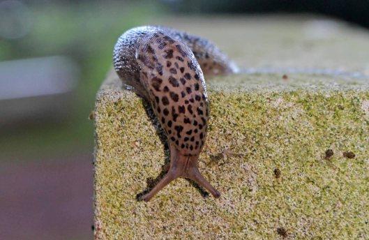 151211 slugs (3)