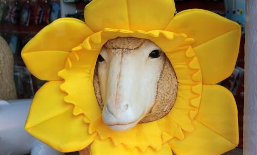 160204 daffodil (2)