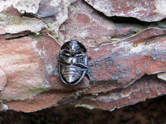 160214 Carrion beetle Phosphuga atrata(2)