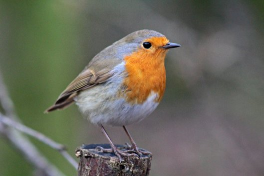 160215 robin conversation (1)