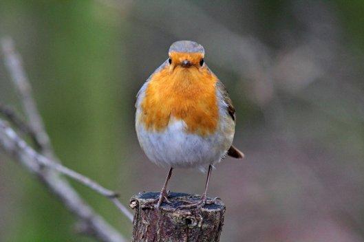 160215 robin conversation (2)