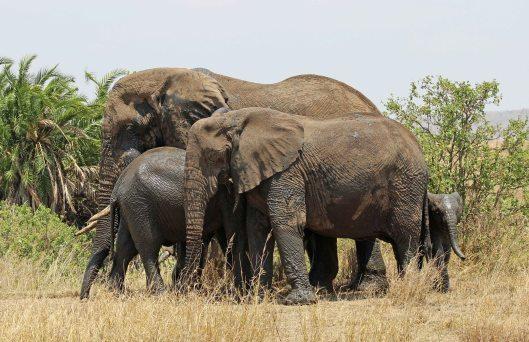 elephants 5