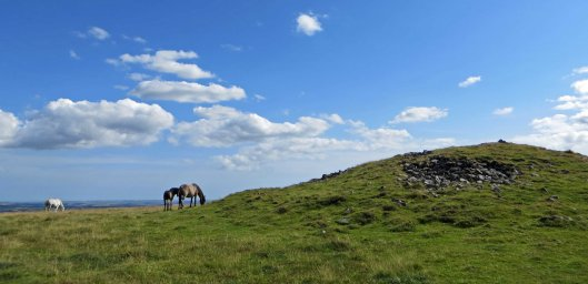 160313 dartmoor ponies (1)