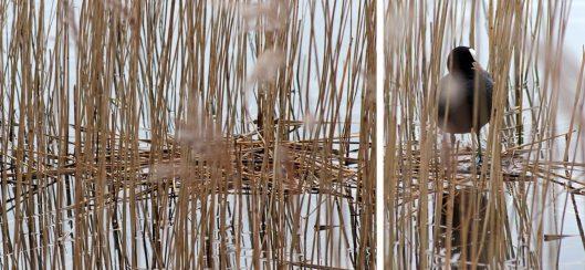 160314 nesting site (1)