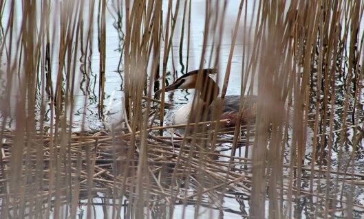 160314 nesting site (3)