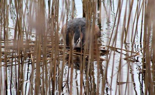 160314 nesting site (4)