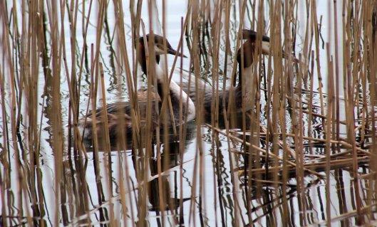 160314 nesting site (5)