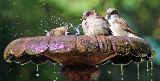 160320 sparrow (1)