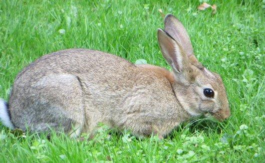160327 rabbit (1)