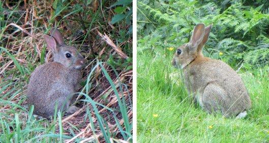 160327 rabbit (2)