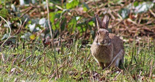 160327 rabbit (3)