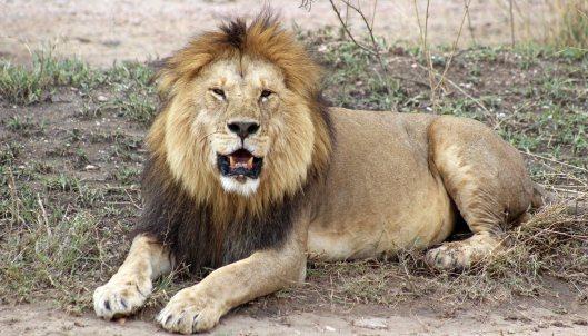160330 lions (1)