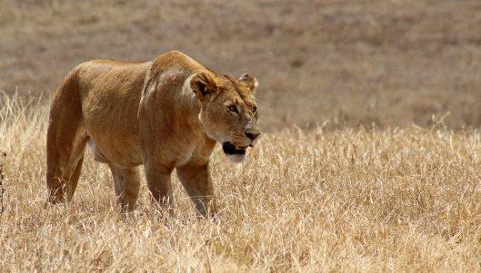 160330 lions (2)