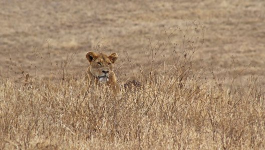 160330 lions (4)