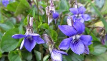 160417 violet blue