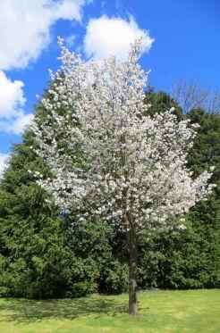 160422 blossom (7)