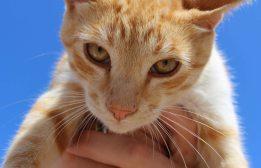 160427 cats Morocco (12)