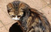 160427 cats Morocco (3)