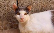 160427 cats Morocco (4)