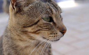 160427 cats Morocco (5)