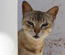 160427 cats Morocco (6)