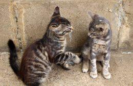 160427 cats Morocco (8)