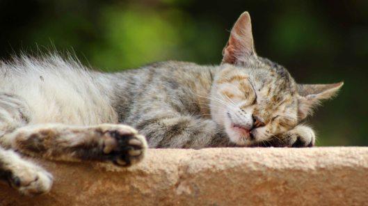 160427 cats Morocco (9)