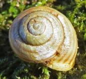 160502 snail (1)