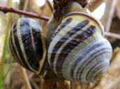 160502 snail (2)