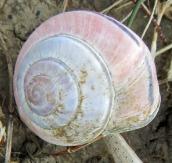 160502 snail (3)