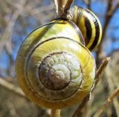 160502 snail (4)
