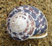 160502 snail (5)