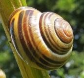 160502 snail (6)