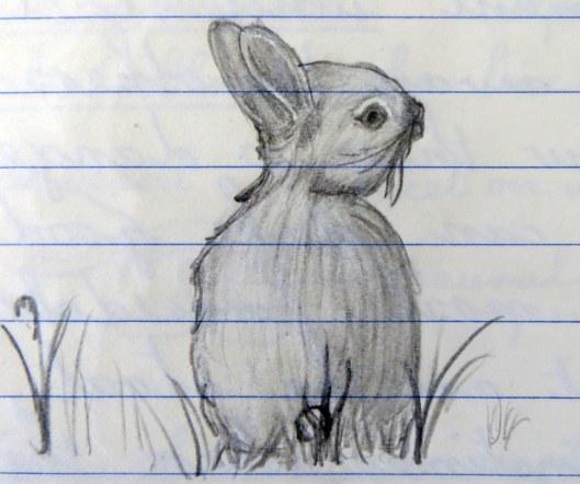 160515 rabbit (1)