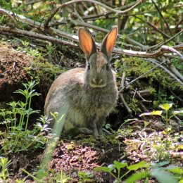160515 rabbit (2)