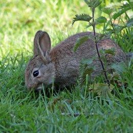 160515 rabbit (3)