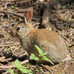 160515 rabbit (5)