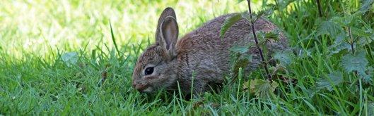 160515 rabbit (6)