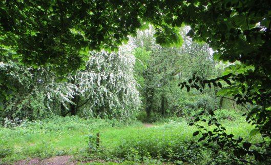 160521 biodiversity (10)