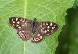 160521 biodiversity (13)