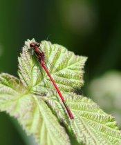 160521 biodiversity (3)