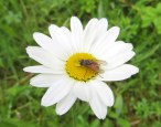 160521 biodiversity (5)