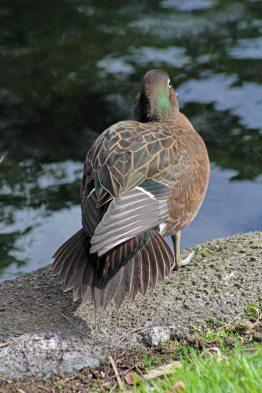 160530 brown teal (2)