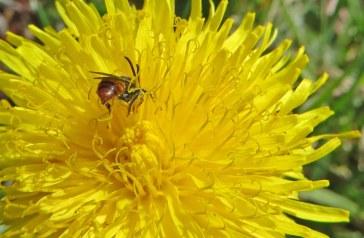 160603 yellow wildflowers (7)