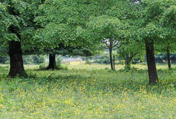 160603 yellow wildflowers (9)