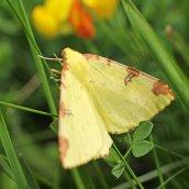 160607 CathaysCem biodiversity (11)