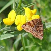 160607 CathaysCem biodiversity (4)