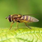 160607 CathaysCem biodiversity (5)