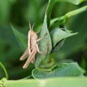 160607 CathaysCem biodiversity (6)