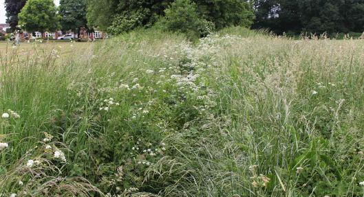 160612 heath park (2)